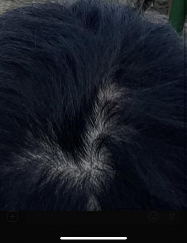 머리감기전